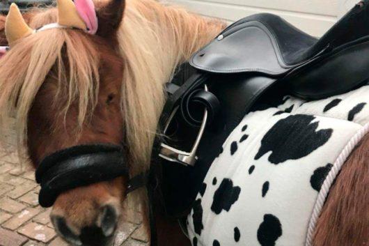 Pony feestje Koe De Natureluur