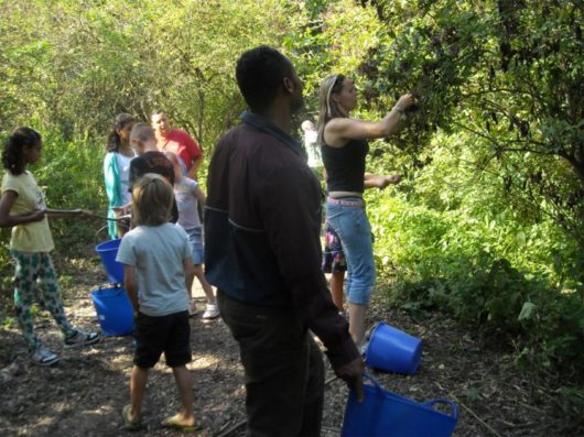 Wildplukken en eten bereiden - Den Natureluur