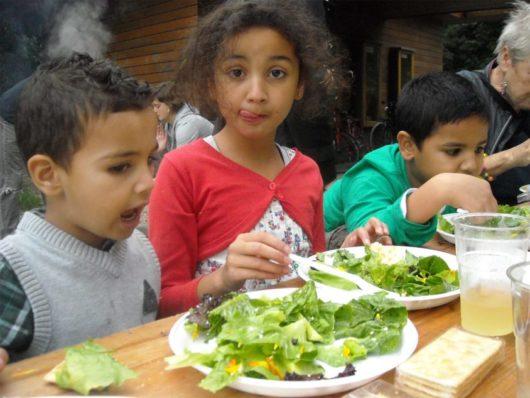 Wildplukken en eten bereiden - De Natureluur