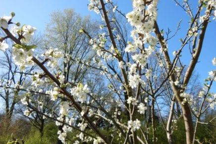 Binnenkort: lente !